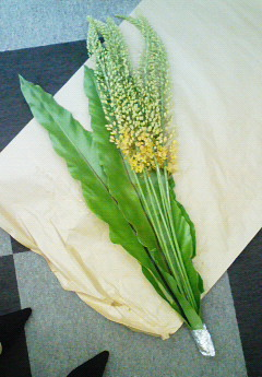 ikebana%20ai2-1.jpg